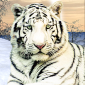 Wild White Tiger: Jungle Hunt