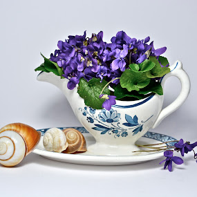 by Anisja Rossi-Ungaro - Artistic Objects Still Life ( cup, shells, white )