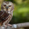 Schlitz Audubon Nature Center no watermark 5-16-15 -60.jpg