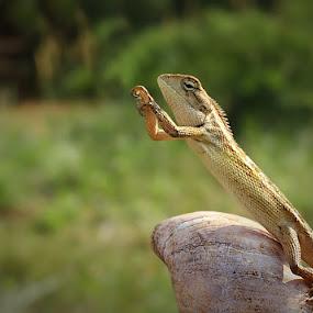 Hope  by Angga Putra - Animals Reptiles