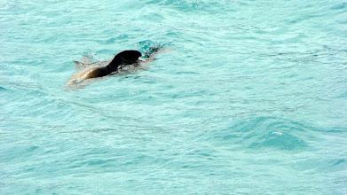 Photo: Seal, Apollo Bay, Great Ocean Road