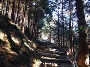 登りとなる(よく整備された登山道)