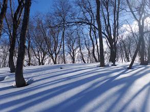 雪に映る影