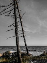 "Photo: 1. plads november 2018, foto: Dorte Truelsen. Tema: ""Et træ""."