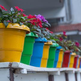 Beautiful pots by Ruth Holt - Artistic Objects Still Life ( multicoloured, bright, dreamcatcher resort, flower pots, munnar )