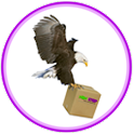 non stop couriers icon