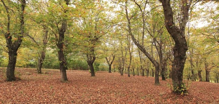 Tappeto di foglie di Massimiliano73