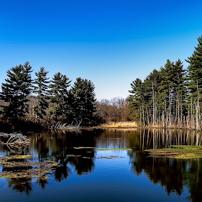 Swallow's Lake by Scott Bryan - Landscapes Waterscapes ( water, reflection, sky, ohio, tree, waterscape, cadiz, beautiful, lake, landscape,  )