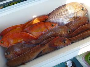 Photo: タムラさんは午後は失速。 真鯛8枚でした。