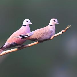 Birds by Subhendu Mahata - Uncategorized All Uncategorized