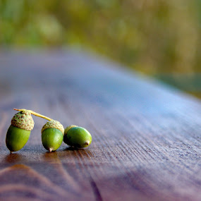 na lavičce by Jarka Hk - Nature Up Close Other Natural Objects ( nature, acorns, beatiful, things, decoration, three, fotografia )
