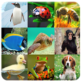 Animals Game for kids APK Icon
