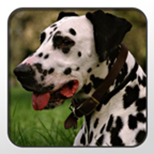 Dalmatian Theme - Nova/ADW/GO 個人化 App LOGO-硬是要APP