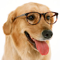 Dog Training(Easy 2 Difficult) icon