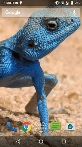 Water Lizard Ripple Effect LWP