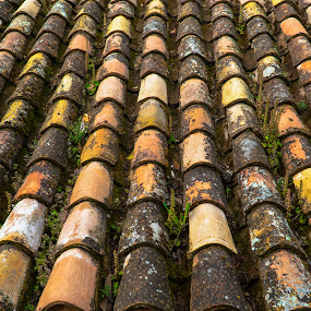 Old Roof Tiles by Luke Albright - Buildings & Architecture Architectural Detail (  )
