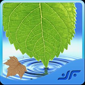 Medicinal Plants & Herbs