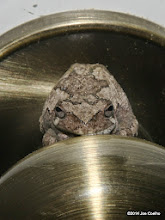 Photo: There's a tree frog at the door...