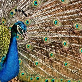 by Eric Dimaano - Animals Birds