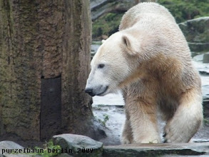 Photo: Knut unternimmt einen Anlagenrundgang...