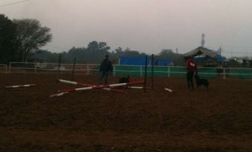 The Stables in New Delhi that Lied to Me about the Job! | Krys Kolumbus Travel