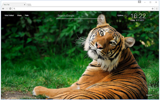 Tiger Wallpapers Tigers New Tab Freeaddon Com
