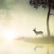 К чему снится олень с рогами?