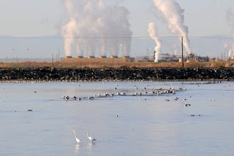Photo: Geothermal power plants line the southern shore of Salton Sea