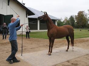 Photo: BA010136 Janow Podlaski - stadnina koni