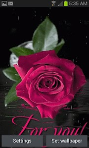 Pink Rainy Rose LWP screenshot 0
