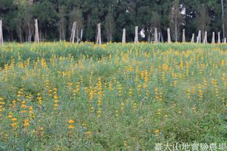 Photo: 拍攝地點: 梅峰-一平臺 拍攝植物: 羽扇豆(魯冰花) 拍攝日期: 2015_10_27_FY