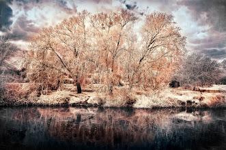 Photo: Waterside Grove (Clive Haynes)