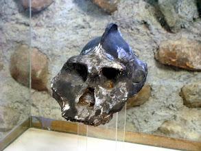 Photo: Australopithecus in Kenya