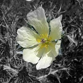 Wildflower by Fanie van Vuuren - Black & White Flowers & Plants