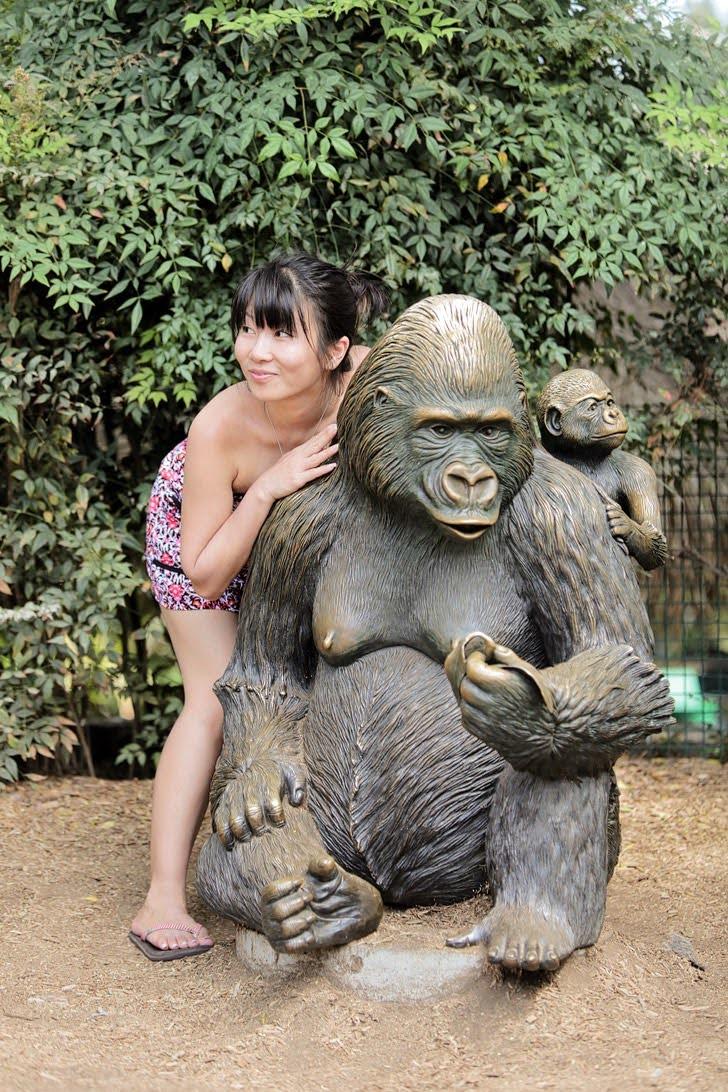 Gorillas San Diego Safari Park.