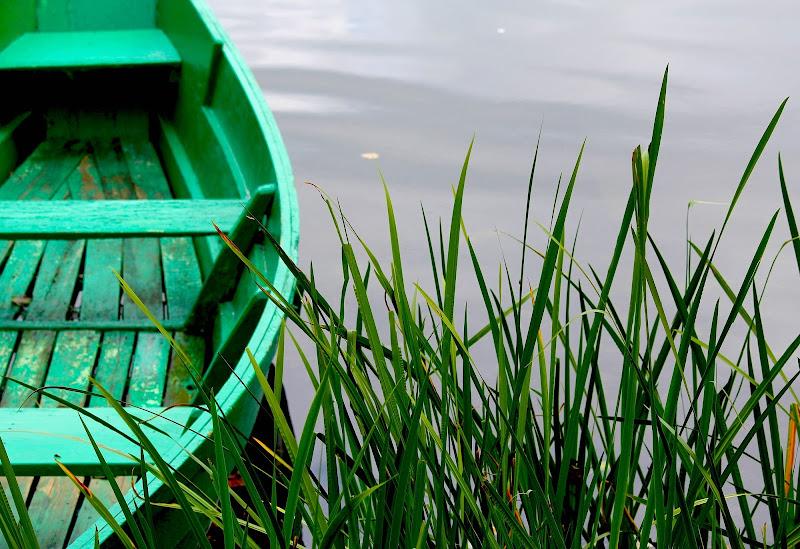 Verdi e trasparenti acque di Arthemisia
