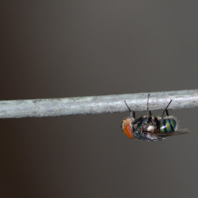 by Kumail Abbas - Animals Insects & Spiders