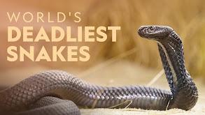 World's Deadliest Snakes thumbnail