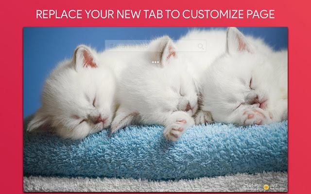 Persian Cats Wallpaper HD Custom New Tab