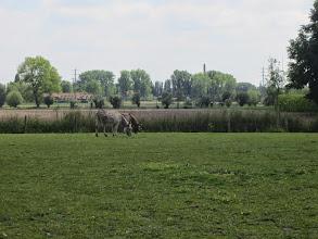 Photo: Paarden en ezels