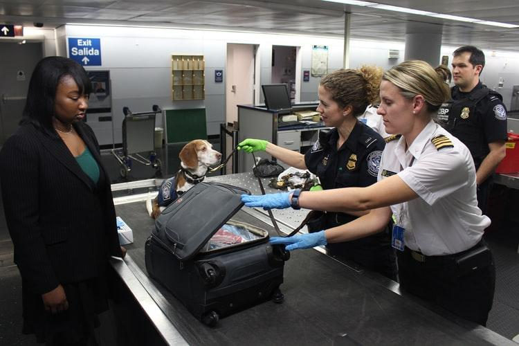 Pet Transporting Companies can make air travel seamless for your pet.