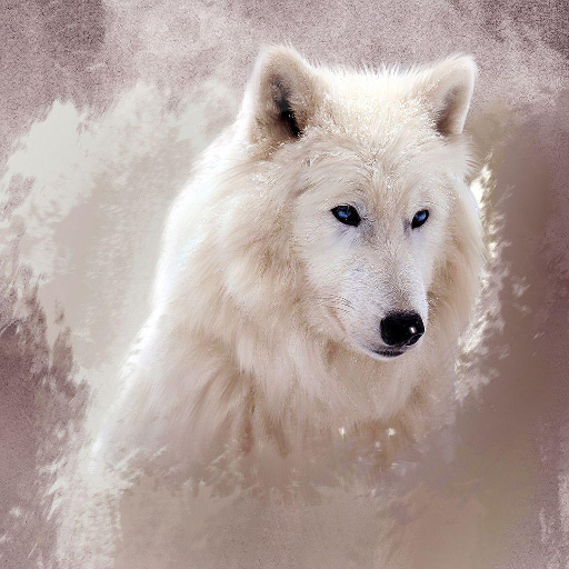 Wolf New HD Wallpapers