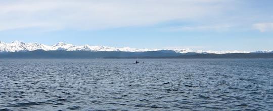Photo: Orca pod