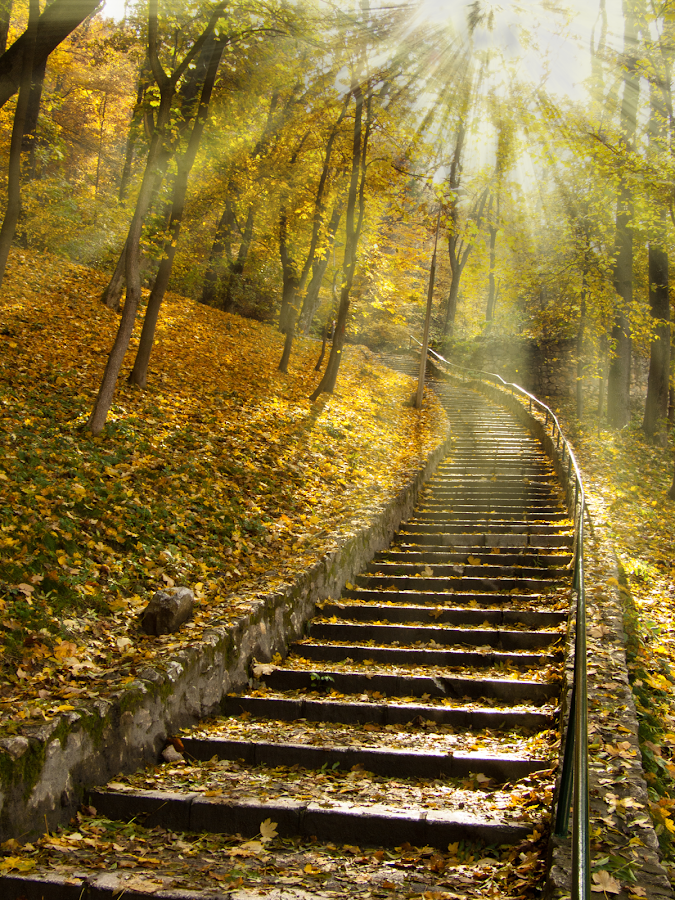 Stairs to heaven through forest.... by Philip Antony - Landscapes Forests ( forest, sunbeam,  )