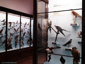 Photo: austria, travel, natural, history, museum, vienna, wien