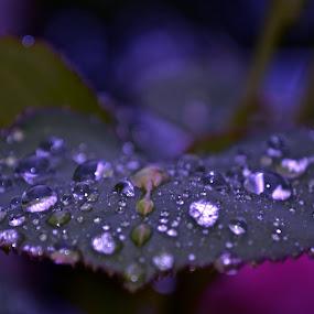 by Megan VanderMeulen - Nature Up Close Flowers - 2011-2013 ( water, rose, color, leaf, light, rain )