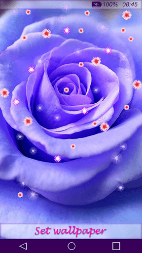 Rose Flower Live Wallpaper HD by Desire Division (Google Play, United States) - SearchMan App Data & Information