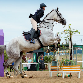 Peanut by Andre Oelofse - Sports & Fitness Other Sports ( horseback, horse, horse rider, show jumping, equestrian )