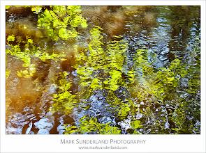 Photo: Spring Reflections in the River Nidd, Nidd Gorge, Knaresborough, Yorkshire, England