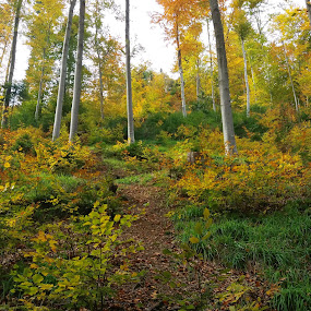 by Gino Libardi - Landscapes Forests ( autumns color, forest )